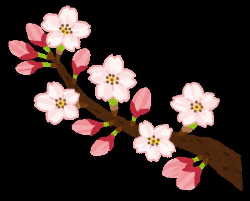 桜の開花のイラスト